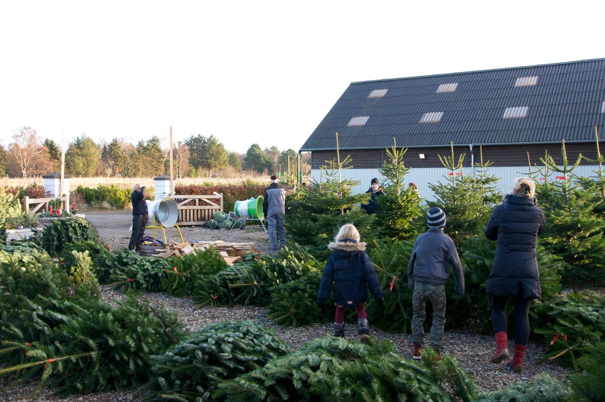 Juletræer på gårdpladsen