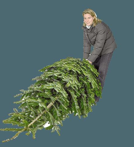 Fældselv juletræ i Halsnæs